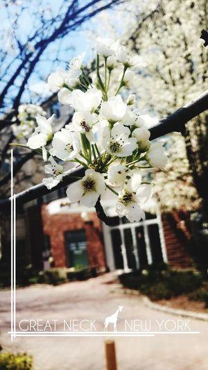 Relaxing Blooming Springtime Itshere Enjoying Life Taking Photos Beautiful