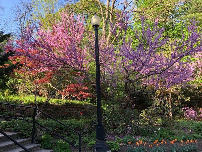 Park Life Trees
