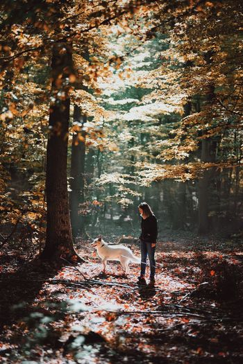Been There. Forest Autumn Colors Autumn Nature_collection Sunny Colorful Lost In The Landscape Done That. The Traveler - 2018 EyeEm Awards