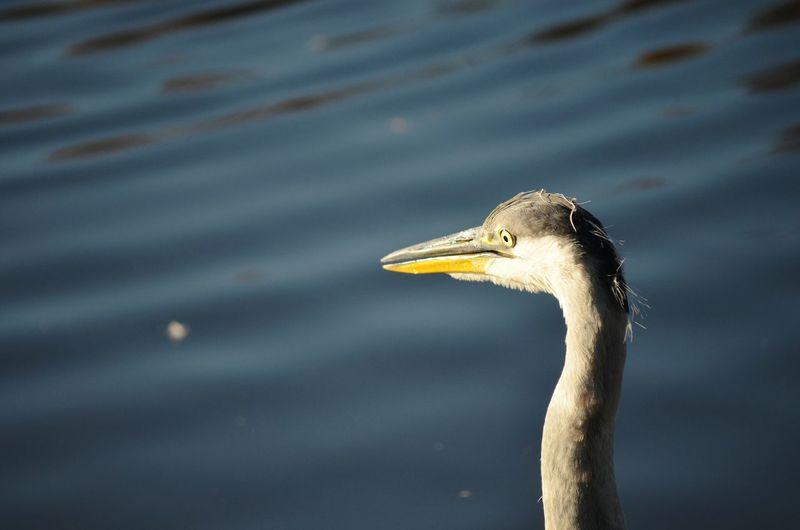 Close-up of heron