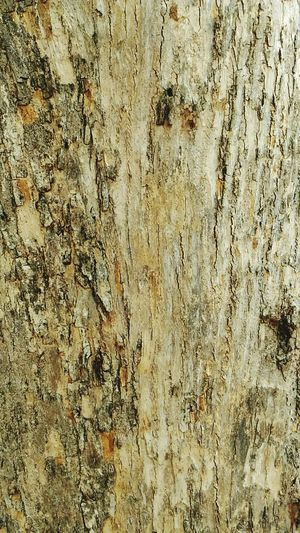 Textures And Surfaces Texture Surface Tree Brown Texture