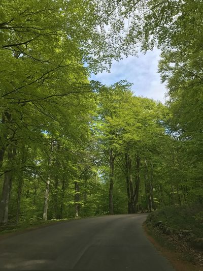 🌳 Tree Nature Road The Way Forward Day Forest Beauty In Nature Green Color No People Sky Springtime Freshness Cloud - Sky Nature Sunlight Shadow No Filter, No Edit, Just Photography