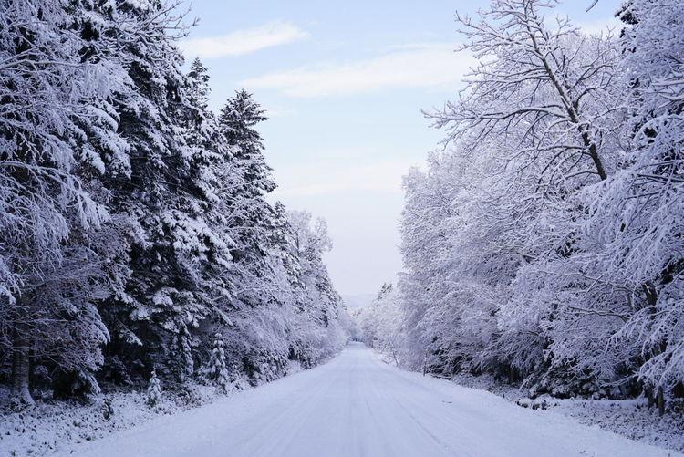 初冬 Tree Snow