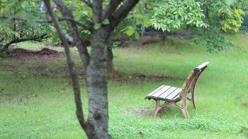 連休までもうちょっと♪ファイト👍お仕事の方ゴメンね😅 ベンチ Park Bench Bench EyeEm Best Shots EyeEm Gallery Enjoying Nature ひとやすみ おはよう♪今日もよろしくね😃