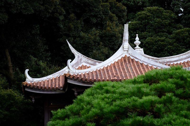 Roof. Park