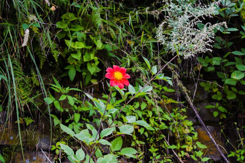 LonelySoul Kasauli Hills Flower Red Hills India Indiapictures