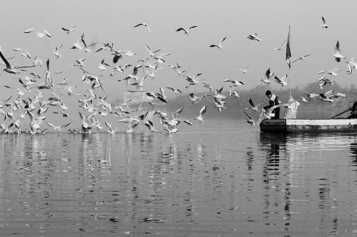 Chemistry between boatmen and the birds ❤️ Canonphotography Canonlove Canon1300d Delhi YamunaRiver YamunaGhat Day Beauty In Nature Reflection Outdoors Migrating Water Nature Animal Themes Animals In The Wild Flying Flock Of Birds Bird Large Group Of Animals Siberians Birdfood Love ♥ Humankind Morning