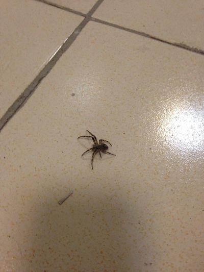 Spider Kzn Kazan