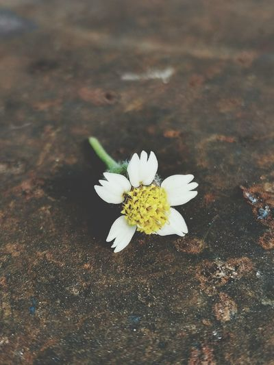 High angle view of white flowering plant