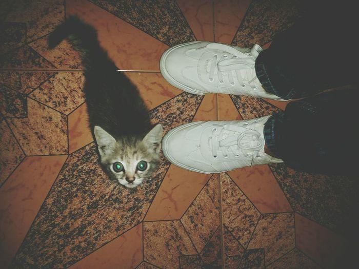Cat Loving Cute♡ MySneakers Ma Girl ?