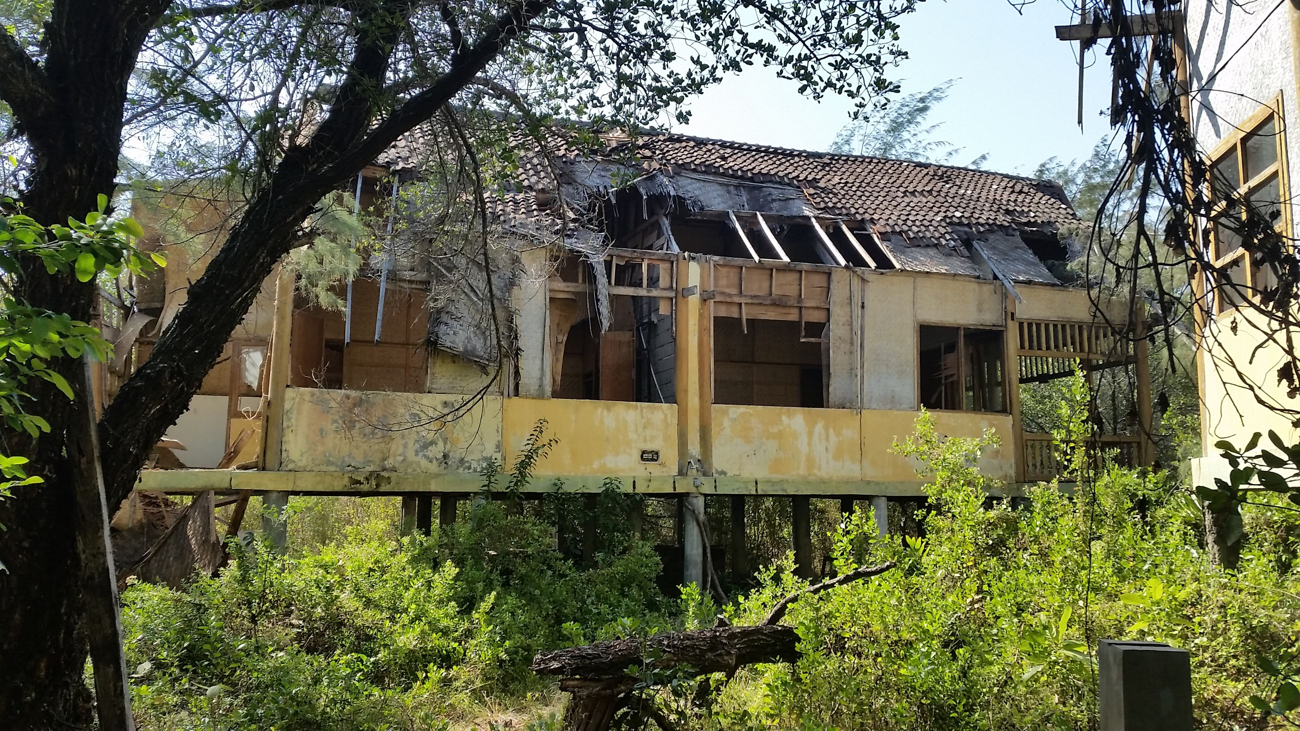 architecture, built structure, building exterior, tree, house, plant, growth, residential structure, abandoned, low angle view, old, residential building, sky, day, green color, no people, outdoors, grass, damaged, building