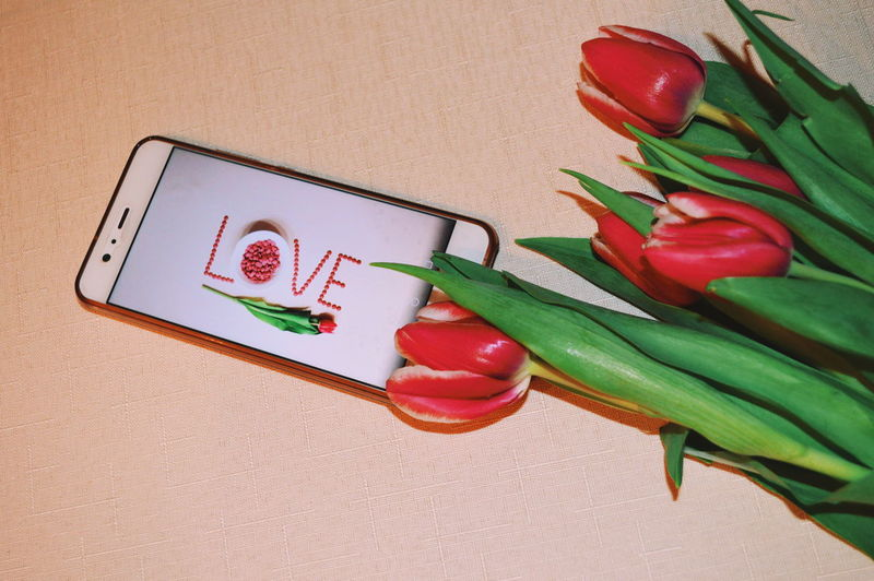 Indoors  Table Still Life Freshness No People Communication Close-up High Angle View Flower Flowering Plant Plant Red Love Positive Emotion Tulip Emotion Wellbeing Green Color Smart Phone Valentine's Day  My Best Photo #NotYourCliche Love Letter