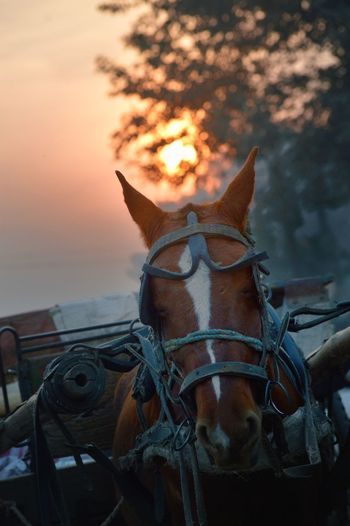 Close-up of horse against sky during sunset