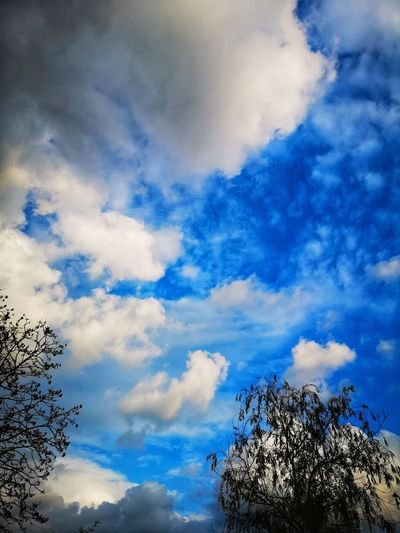 Blue Tree Sky Cloud - Sky
