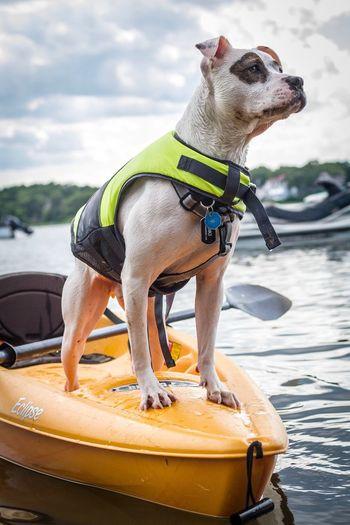 One Animal Dog Animal Themes Pets Outdoors Domestic Animals Day Water Sea No People Mammal Sky PitBullNation