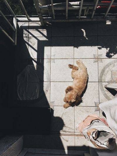 Pets Shadow Domestic Animals Mammal Domestic Cat One Animal Animal Themes Sunlight High Angle View Full Length Day Sitting Standing Dog Indoors  No People Low Section