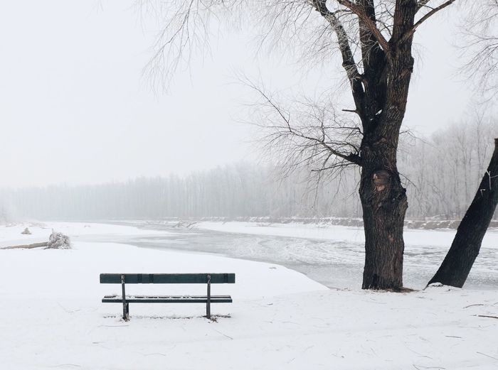 Winter Cold Temperature Snow Nature Tree Weather Bare Tree Beauty In Nature Outdoors Frozen Ice Day No People Tranquility Cold Sky Scenics Landscape Frozen Lake Vscocam EyeEm Best Shots Fujifilm_xseries The Great Outdoors - 2017 EyeEm Awards Shades Of Winter