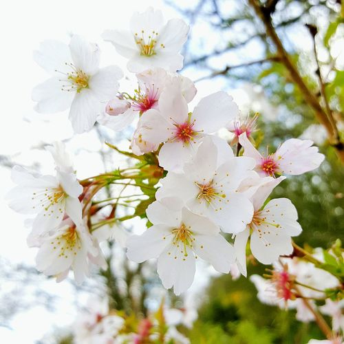 Almond blossom Flower Nature Growth Branch Blossom Beauty In Nature Close-up Flower Head Plant Almond Tree Springtime Stamen Fragility Freshness Outdoors Twig Day Tree No People Low Angle View Close Up Photography Garden Photography Beauty In Nature Pale Pink
