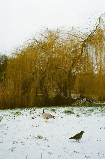 View of birds in water during winter