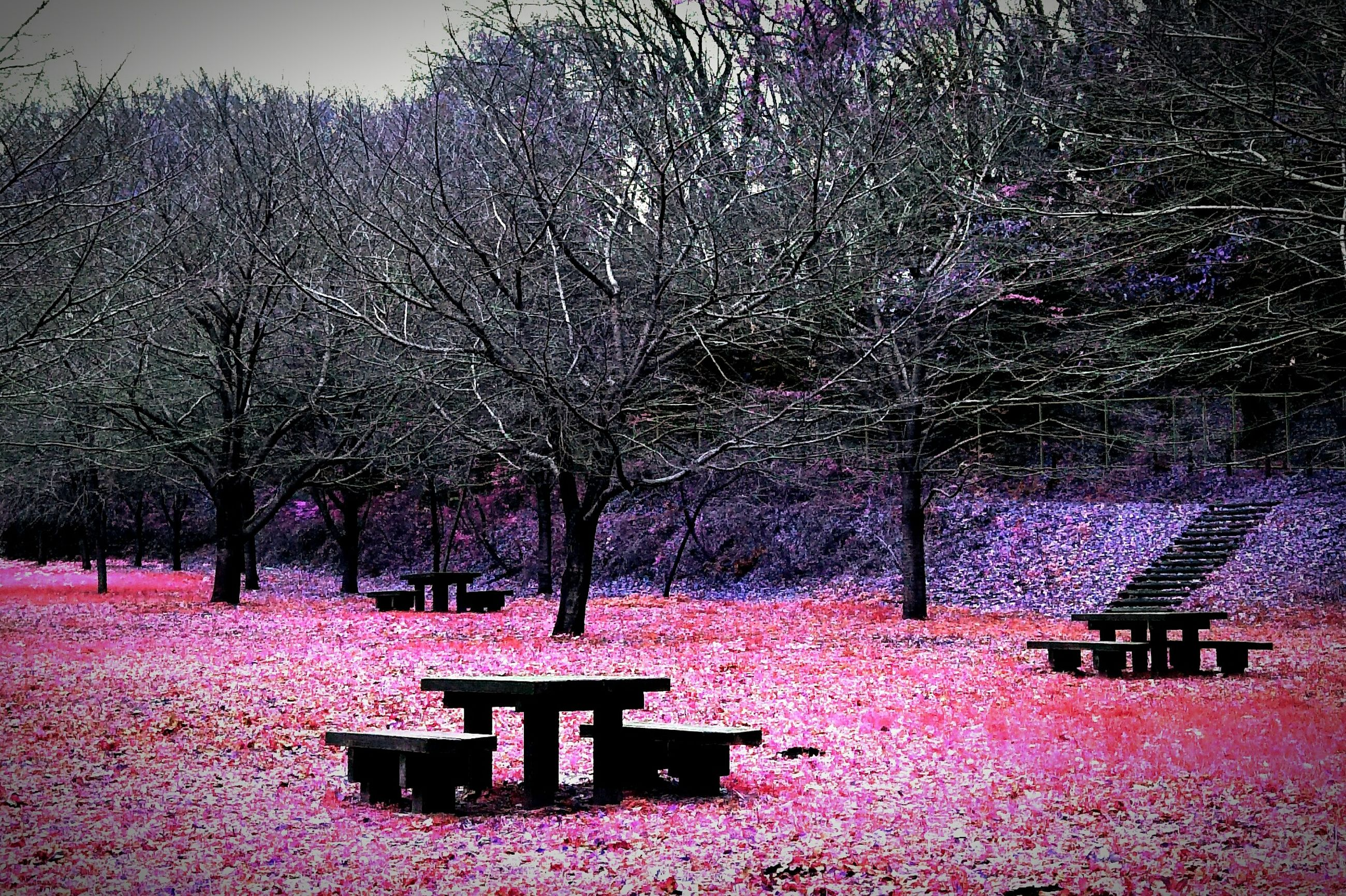 tree, built structure, architecture, building exterior, flower, season, branch, nature, house, growth, pink color, beauty in nature, bare tree, weather, outdoors, park - man made space, day, no people, tranquility, decoration
