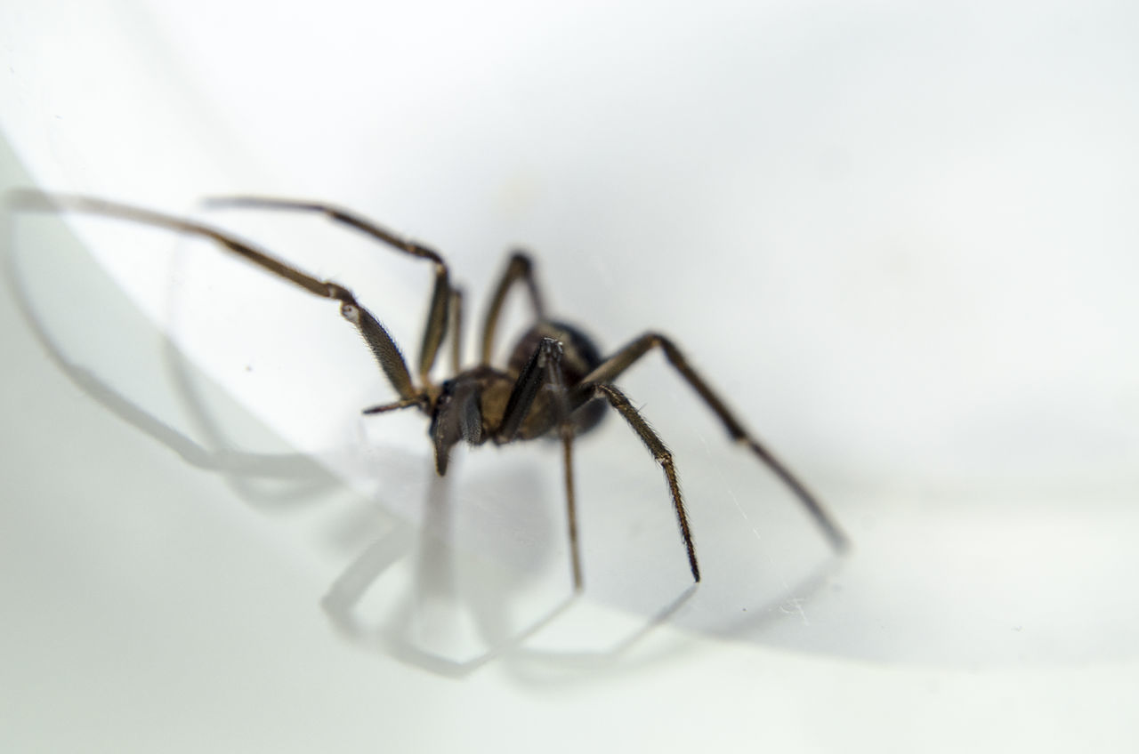High Angle View Of Spider On Table