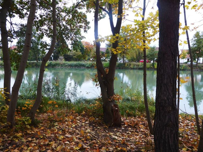 Beauty On A Cloudy Day Mittellandkanal Favorite Place Tranquility Beauty In Nature Tranquil Scene Tranquility Waterreflections  Lovemyhometown Autumn🍁🍁🍁 Autuum 2016 Beauty In Nature Bicycle Trip Naturelovers Simple Beauty Beauty In Simplicity