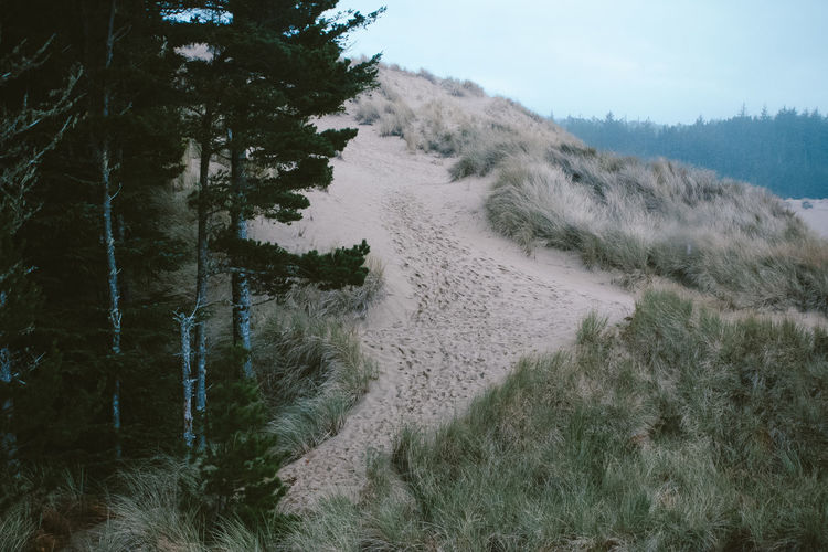 Trees and grass on sand dune at beach