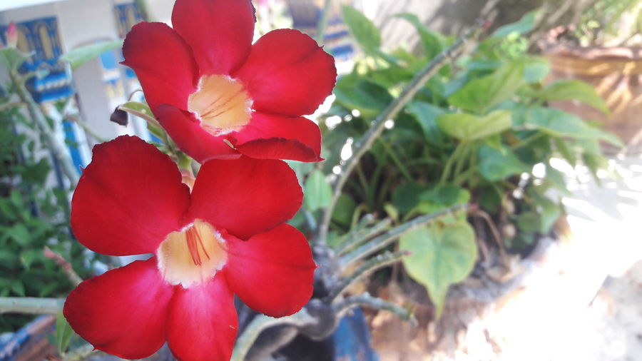 Red Nature Beauty In Nature Day Outdoors Plant No People Flower Growth Close-up Fruit Flower Head Tree Freshness