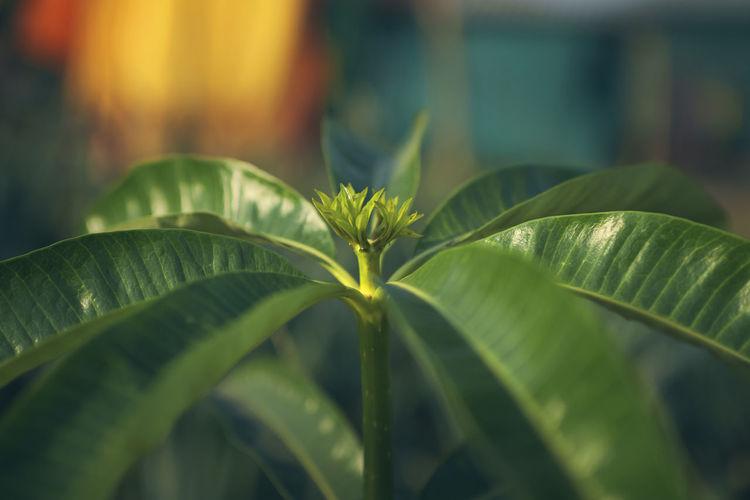 Closeup of plant stem