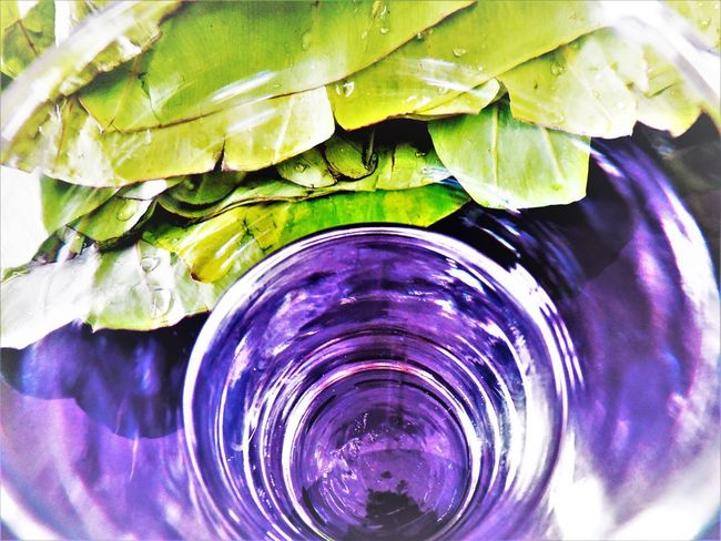 Abstract Photography Abstractions In Colors Close-up Day Freshness In A Glas Indoors  Kalo No People Passion Sustainability Taro Water