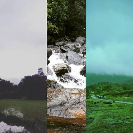 Collage... Nature Naturelovers Natureclicks Rain RainyDay Amazing Colors Awesome Mobilephotography Samsung Shades Instagram Alive  Green Fog Foggy India Maharashtra Pune Photooftheday Picoftheday Perfectnature Dm Trekking Travel