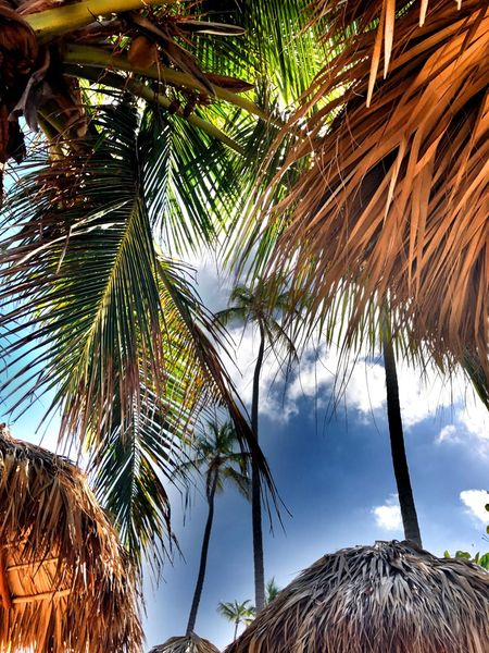 EyeEmNewHere Palm Tree Tree Nature Sky Tranquility Scenics Beauty In Nature No People Growth Sea Tropical Climate Branch Outdoors Palm Frond Day Sommergefühle