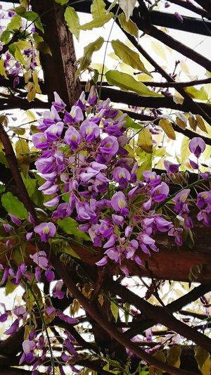 Flower Growth Tree Beauty In Nature Springtime Low Angle View Nature Freshness Day No People Outdoors Close-up Flower Head フジ