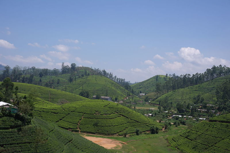Tea plantations Agriculture Beauty In Nature Land Landscape Plantation Scenics - Nature Tea Crop Tranquil Scene Tree