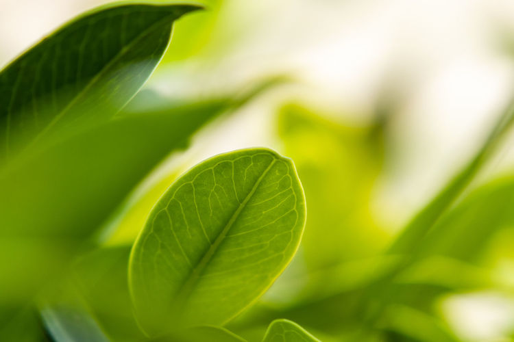 Greenery Nature Nature_collection Nature Photography Foliage Natural Beauty Light Wallpaper Leaf Vein Leaves Plant Life Dew Blade Of Grass Stem Frond Growing Bud Damselfly Focus Botany Pistil In Bloom Stamen