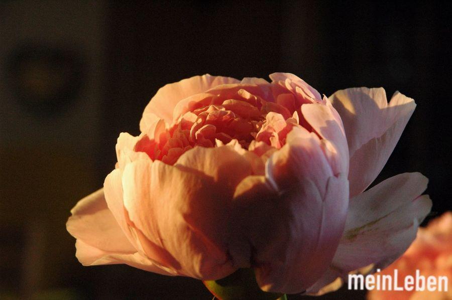 Its Summer:) The Moment - 2014 EyeEm Awards Flower Sun Evening