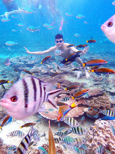 Redang Island Marine Life Sea Life UnderSea Tropical Fish Multi Colored Fish Swimming Underwater Clear Waters Coral Reef Ocean❤ Nature Tropical Climate Summer EyeEmNewHere