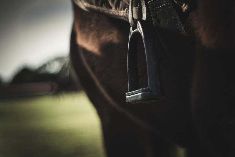 """I never knew it was called """"Stirrup"""" :) Animal Themes Close-up Day Domestic Animals Farm Focus On Foreground Girth Horse Mammal No People One Animal Outdoors Saddle Sky Stirrup"""