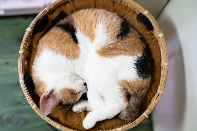 Mammal Domestic Pets Animal Animal Themes Domestic Animals One Animal Sleeping Container Feline Cat No People Basket Vertebrate Indoors  Domestic Cat High Angle View Close-up Eyes Closed  Relaxation Whisker