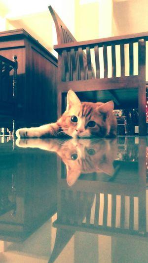 Are you capturing me ? Tebingtinggi Indonesian Cat Photography Lazycat Catlover Mylovelycat