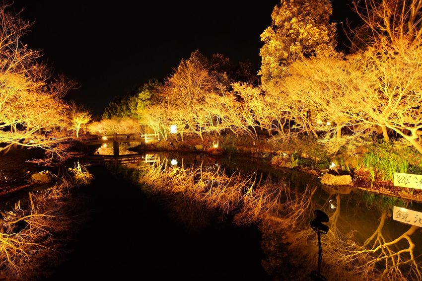 Water Reflection Nature Lake Beauty In Nature Outdoors Tranquility Night No People Tree Scenics Illuminated Sky
