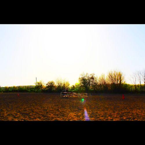 Today's Hot Look Edirne Horse Horse House Tree Sunset Sky Farmland