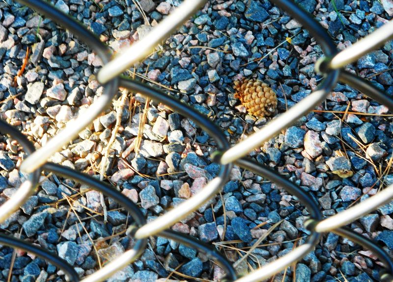 Behind the fence Focus Taking Photos Rocks Light And Shadow Pine Cone Nature Fence Colorado