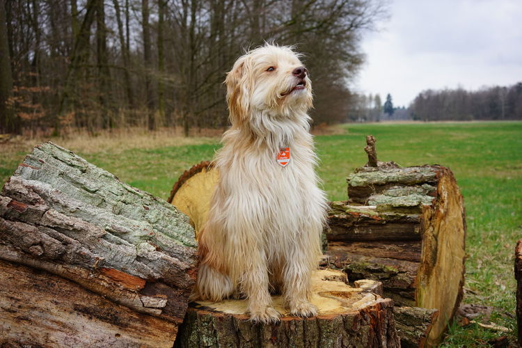 View of a dog on wood