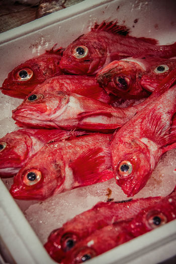 Japan Japanese Food Animal Themes Close-up Day Fish Fish Market FishMarket Food Food And Drink Freshness Healthy Eating Indoors  Market No People Red Retail  Seafood