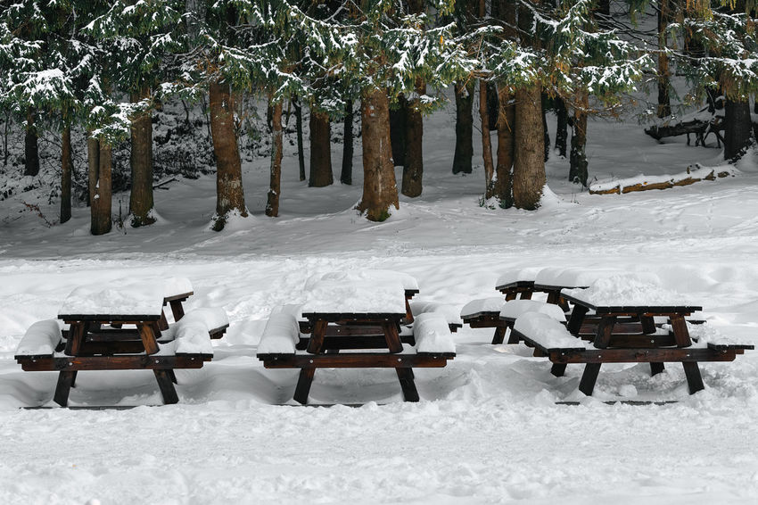 Tree Snow Cold Temperature Winter Park - Man Made Space Park Bench Deep Snow Pinaceae Pine Tree Evergreen Tree Bench