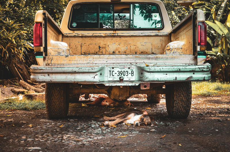 HOLY NAP EyeEm Nature Lover Friends Abandoned Animal Animal Themes Car Day Domestic Domestic Animals Field Land Land Vehicle Lifestyles Mammal Messy Mode Of Transportation Motor Vehicle Nap Nature No People One Animal Outdoors Pets Rusty Transportation