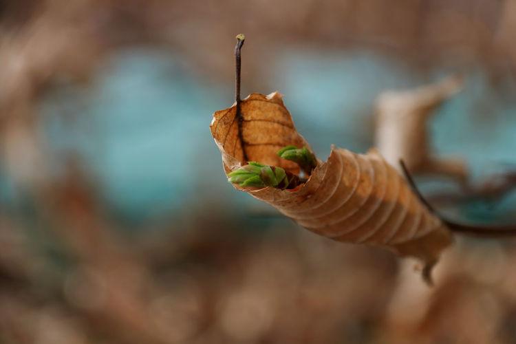 Close-up of leaf on twig