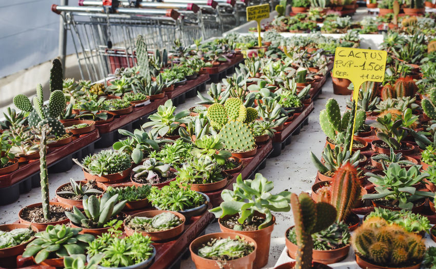 High angle view of potted plants in market