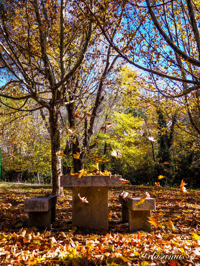 EyeEm Selects Colors Olympus OM-D E-M10 Mark II Madrid Olympus Olympus Om-d E-m10 SPAIN España🇪🇸 Españoles Y Sus Fotos España Perspectives On Nature Tree Cemetery Tombstone Autumn No People Branch Outdoors Leaf Day Nature Memorial Tranquility Change Grave Gravestone Graveyard Beauty In Nature Flower Sky